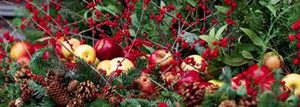 December and January Garden Tips